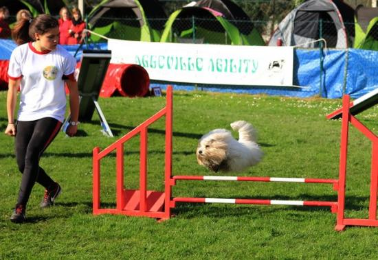 Concours agility 2014